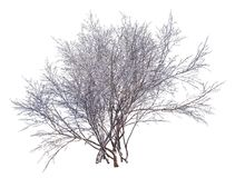 Winter Tree On Snow Isolated White 3D Illustration. 3D illustration Winter tree on snow isolated on white Royalty Free Stock Images