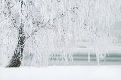 Winter, Tree, Snow, Landscape, Cold Royalty Free Stock Image