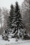 Winter tree in the snow Royalty Free Stock Photos