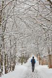 The winter tree in snow from russia Royalty Free Stock Images