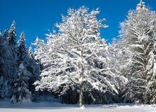 Winter, Tree, Snow, Sky stock image