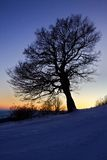 Winter tree. And snow at sunset Stock Photos
