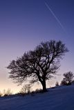 Winter tree. And snow at sunset Royalty Free Stock Image