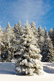Winter tree in snow in winter Stock Photography