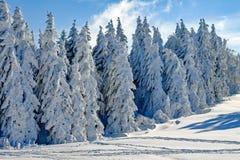 Winter, Tree, Snow, Woody Plant royalty free stock photos