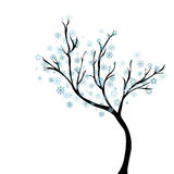 Winter tree with snowflakes Stock Image