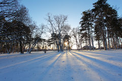 Winter tree with sun rays Stock Photography