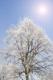 Winter tree and sun Royalty Free Stock Images