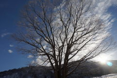 Winter tree in sunlight stock photo