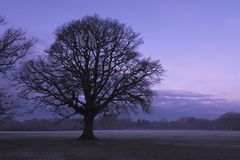 A winter tree at sunrise on a cloudy day on Southampton Common royalty free stock photography