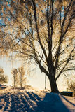 Winter tree at sunset. Winter landscape with trees at sunset. Photographed in Novgorod region, Russia Royalty Free Stock Photos
