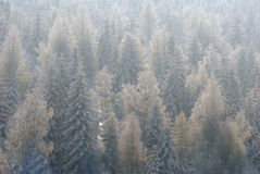 Winter tree treetops forest wsnow Stock Images