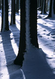Winter tree trunks Royalty Free Stock Images