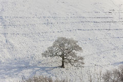 Winter Tree, UK Stock Images