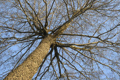 Winter tree,  view from above Stock Images