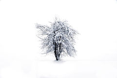 Winter tree whit snow Royalty Free Stock Photography