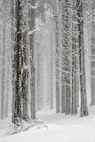 Winter trees. Forest wrapped by snow and fog Stock Image