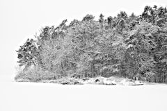 Winter trees. Trees and bushes under Ice and snow. Contrasty image Stock Photography
