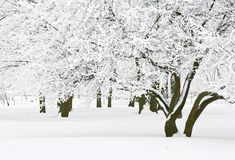 Winter trees Royalty Free Stock Photo