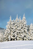 Winter Trees. Winter landscape with trees covered with snow Stock Images
