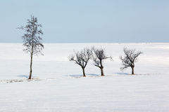 Winter trees. Isolated alone trees on the winter background with blue sky Royalty Free Stock Image