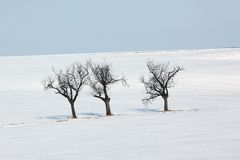 Winter trees. Isolated alone trees on the winter background with blue sky Stock Image
