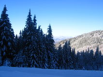 Winter trees. Landscape in Straja Mountains (Romania Stock Photos