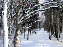 Free Winter Trees Royalty Free Stock Photo - 17442175