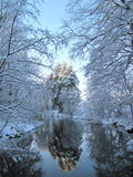 Winter trees. And river with beautiful reflection stock photography