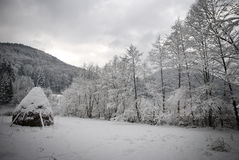 Winter trees. In Slanic Moldova hill, in winter seasson Royalty Free Stock Image