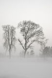 Winter trees Royalty Free Stock Photos