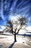 Winter trees. Some trees in the winter coldness Royalty Free Stock Images