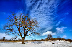 Winter trees. Some trees in the winter coldness Stock Photos