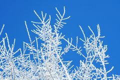 Winter trees Stock Photography