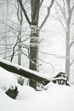 Winter trees Stock Image
