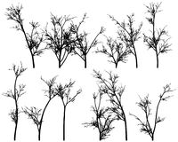 Winter Trees. Winter tress on a white background Royalty Free Stock Images