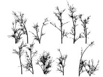 Winter Trees. Winter tress on a white background Royalty Free Stock Image