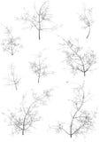 Winter Trees. Winter tress on a white background Stock Photos