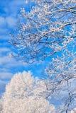 Winter Trees Royalty Free Stock Photos