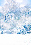 Winter trees. A winter landscape with trees full of snow and with copy space Royalty Free Stock Photo