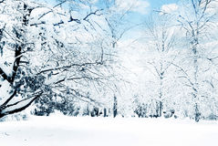 Winter trees. A winter landscape with trees and copy space Royalty Free Stock Photos