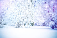 Winter trees. A winter landscape with snow andmagic Christmas stars Royalty Free Stock Photo