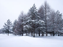 Winter trees Royalty Free Stock Photography