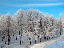 Winter trees. Hoar-frost trees  and road in winter sunny day in city Royalty Free Stock Image