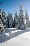 Winter trees. At the end of the forest Royalty Free Stock Photography