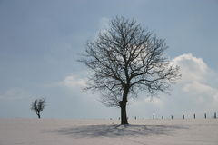Winter trees. Winter landscape with trees royalty free stock image