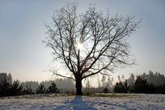 Winter trees Stock Photos