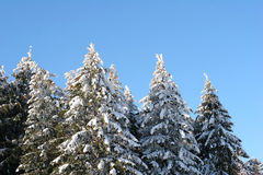 Winter trees. On blue sky royalty free stock photography