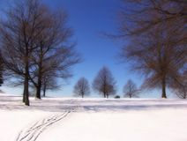 Winter Trees. Winter landscape - trees, snow and blue sky Royalty Free Stock Photo