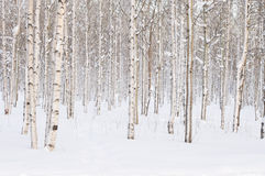 Free Winter Trees Stock Photography - 47613042